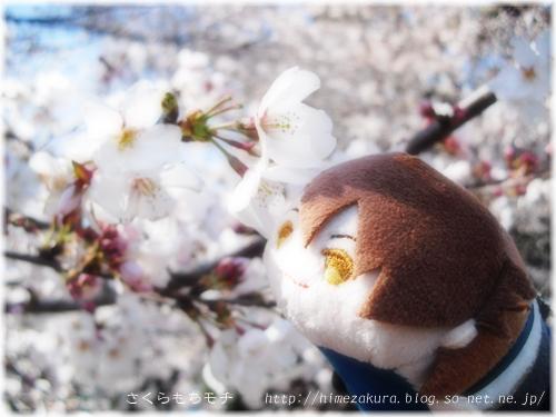 17mochi_ryu_top.jpg