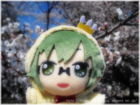 11tw_yamato.jpg